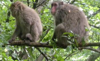 足の指で木をつかんでいる木の上の猿